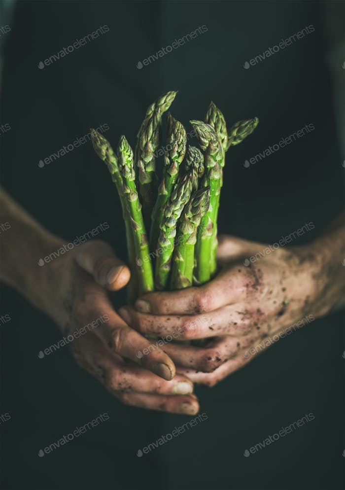 Bunch of fresh green asparagus in dirty man' s hands