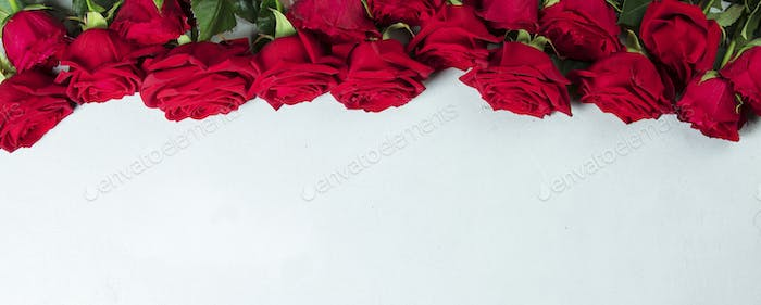 Roses on a white conctere background.