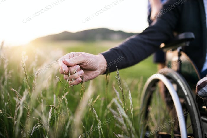 A hand of a senior man in wheelchair holding grass flower in nature. Close up.