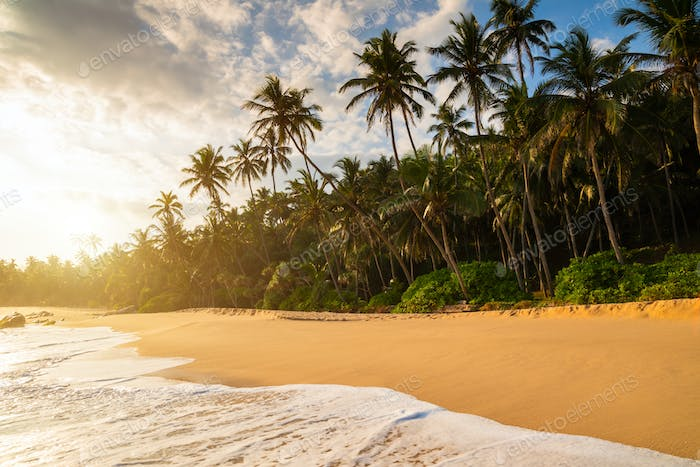 Romantic sunset on a tropical beach with palm trees