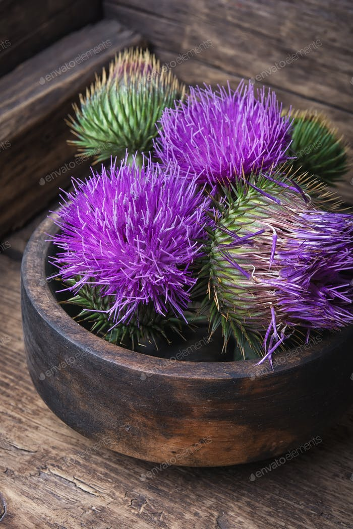 Beautiful milk thistle flower