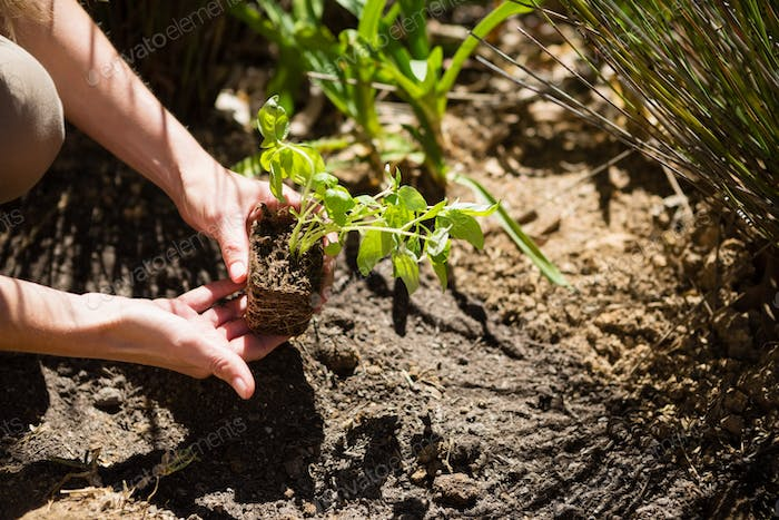 Mid section of woman planting sapling in garden