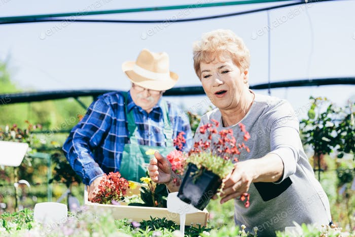 Elderly couple picking the flowers