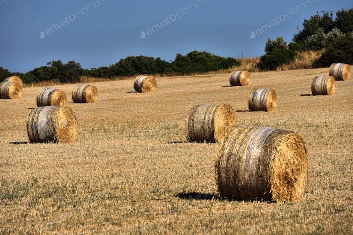 Straw bales, haystack after harvest against blue sky. Agricultural concept