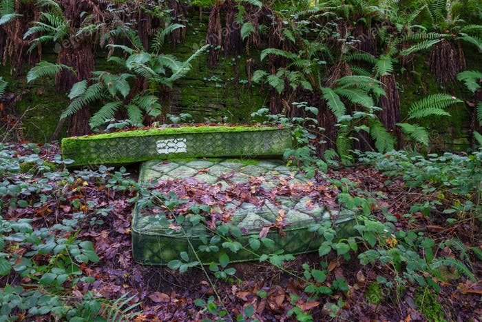 A pair of old mattresses abandoned in the middle of nature