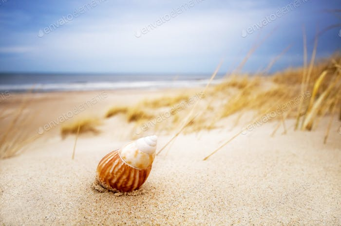 Shell on sand on summer beach