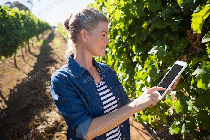 Female vintner using digital tablet in vineyard