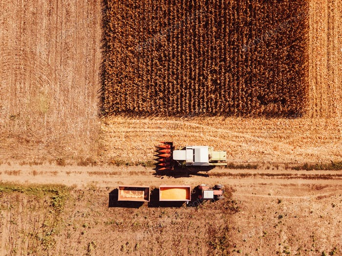 Thumbnail for Aerial view of combine harvester pouring corn kernels into cart