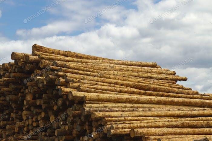 Pile of Fresh Timber