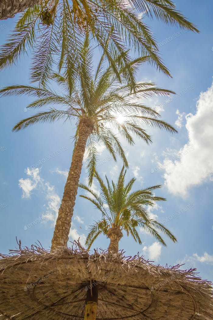 Tropical background of palm trees over a blue sky