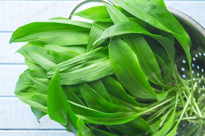 Ramson or wild garlic leaves