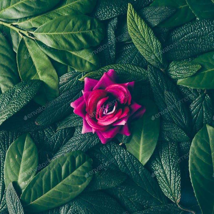 Creative layout made of green leaves and purple flower. Flat lay. Nature concept