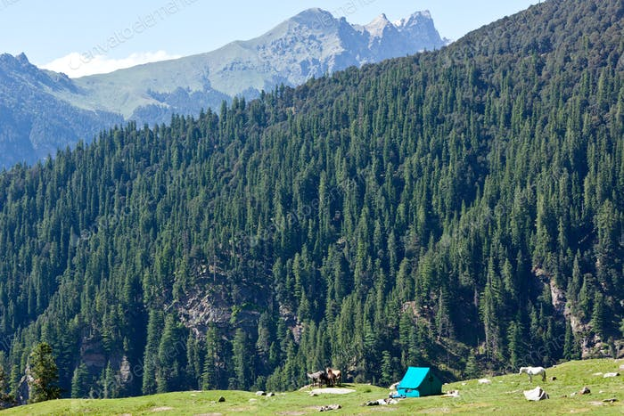 Camp in mountains. Kullu Valley, Himachal Pradesh, India