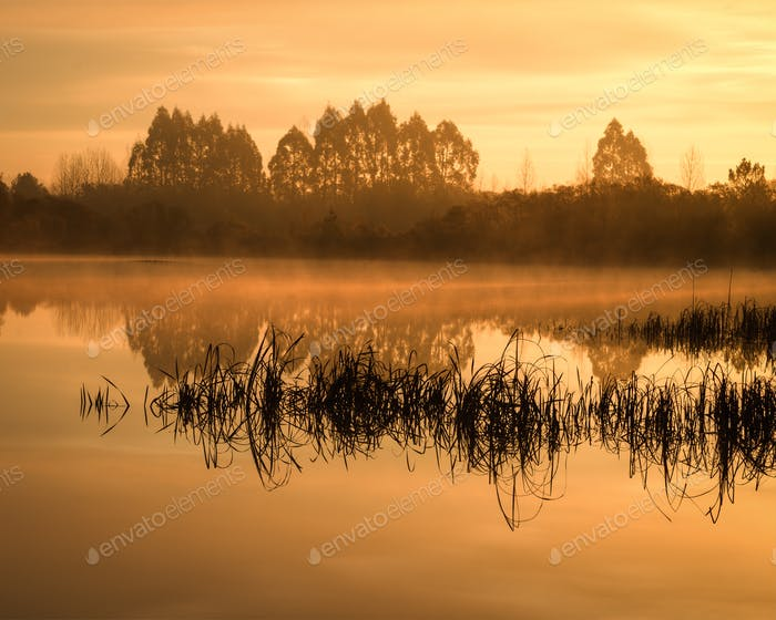 Fog over the Lake and between the Reeds