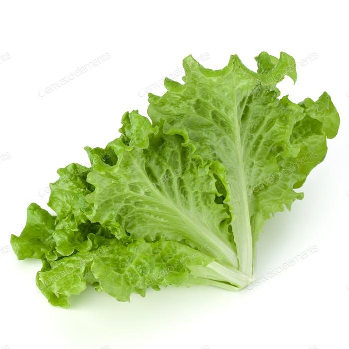 fresh green lettuce salad leaves isolated on white background