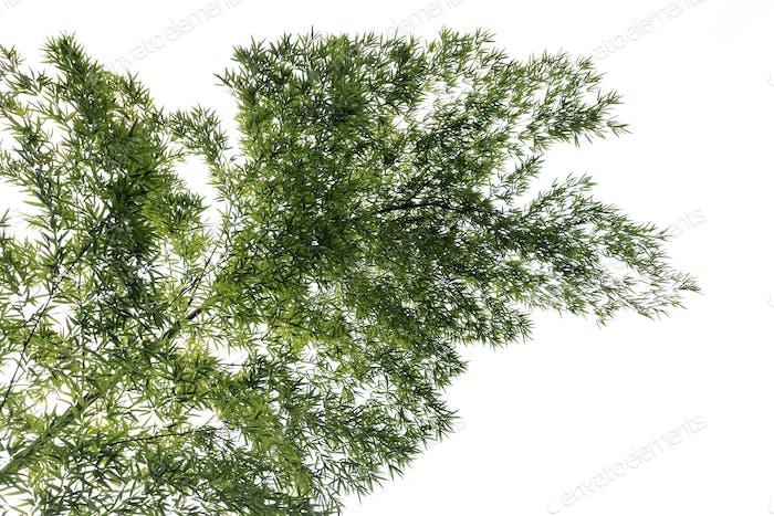 a bamboo tree