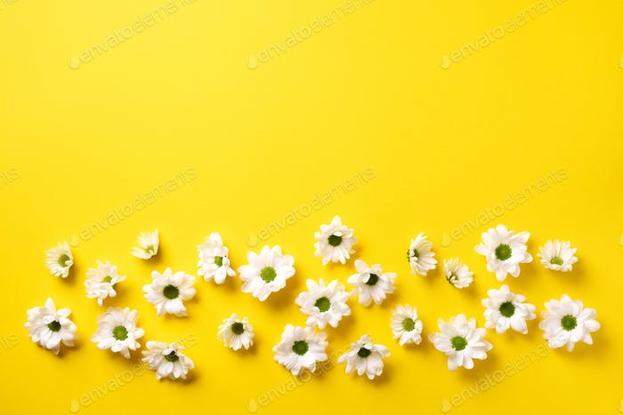 Daisy pattern. Top view. Flat lay. Floral pattern of white chamomile flowers on yellow background