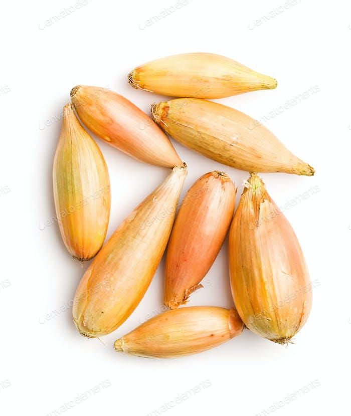 The golden shallot onion.