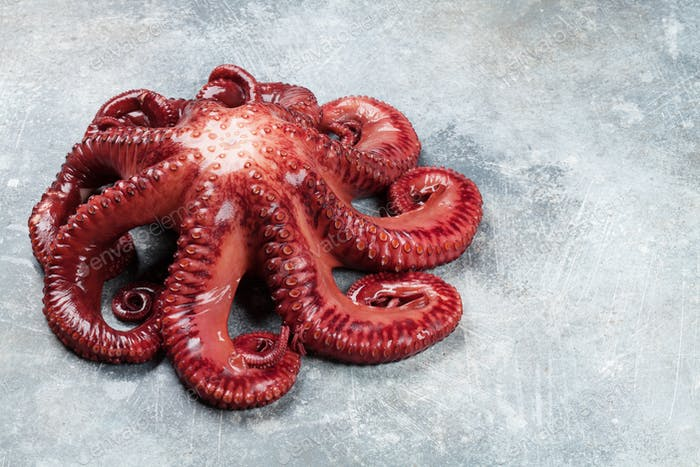 Raw octopus cooking
