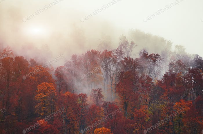 Silhouettes of autumnal mountains with trees in fog