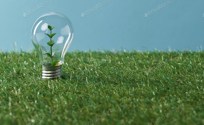 light bulb with plant on green grass and blue background