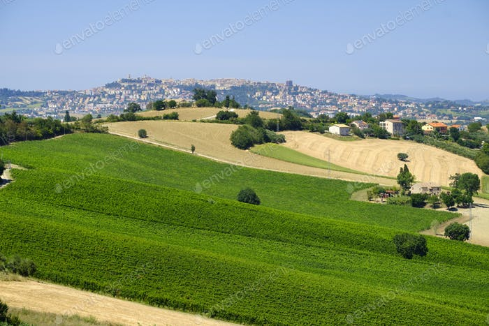 Summer landscape in Marches (Italy) near Montefano