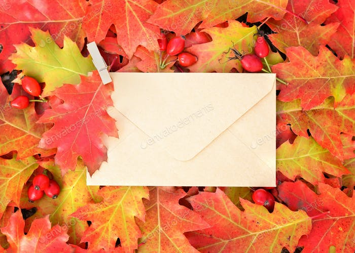 Colorful autumn background with envelope and oak leaves. Top vie