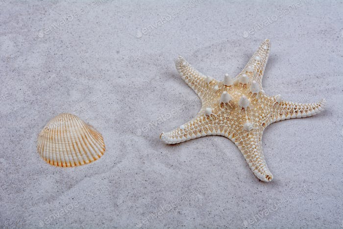 White starfishes and two shells on a sand