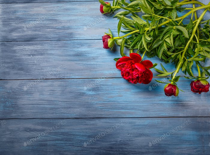 Red peonies on blue wooden background