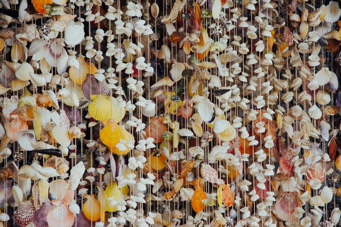 curtain of sea shells