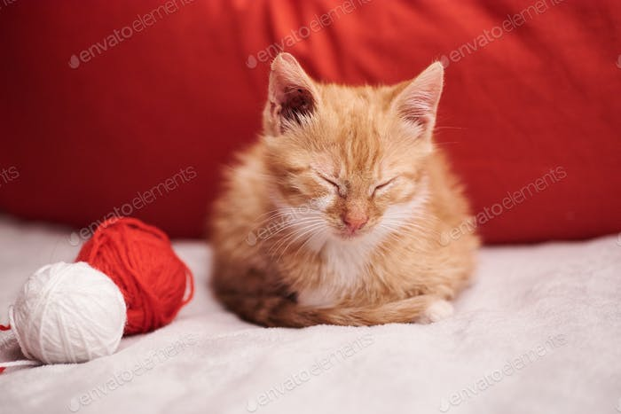 Christmas picture with a cute ginger cat on the red background