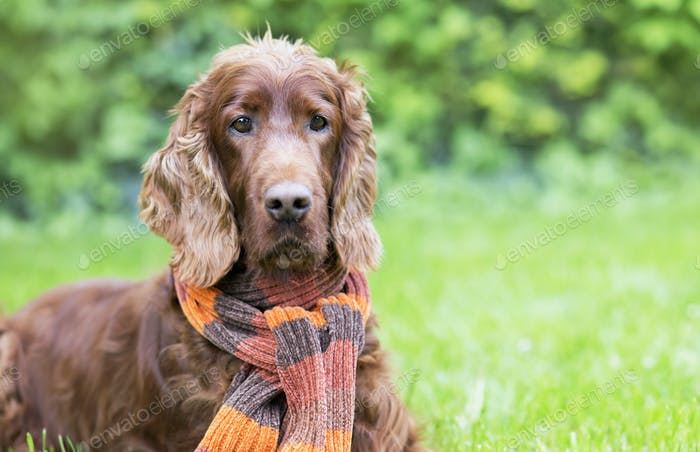 Beautiful dog wearing a scarf