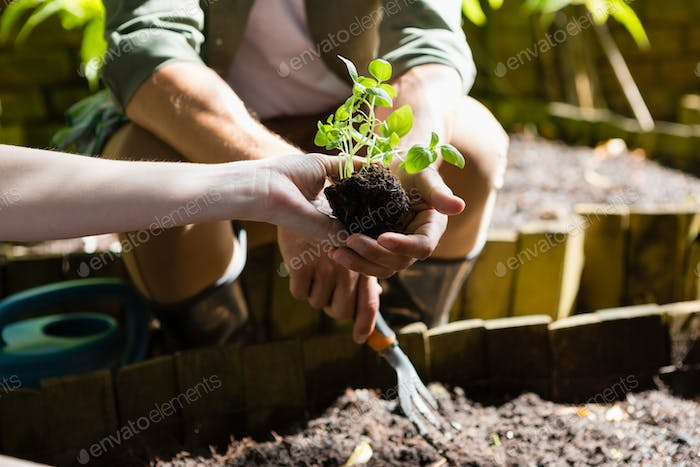 Couple planting young plant into the soil
