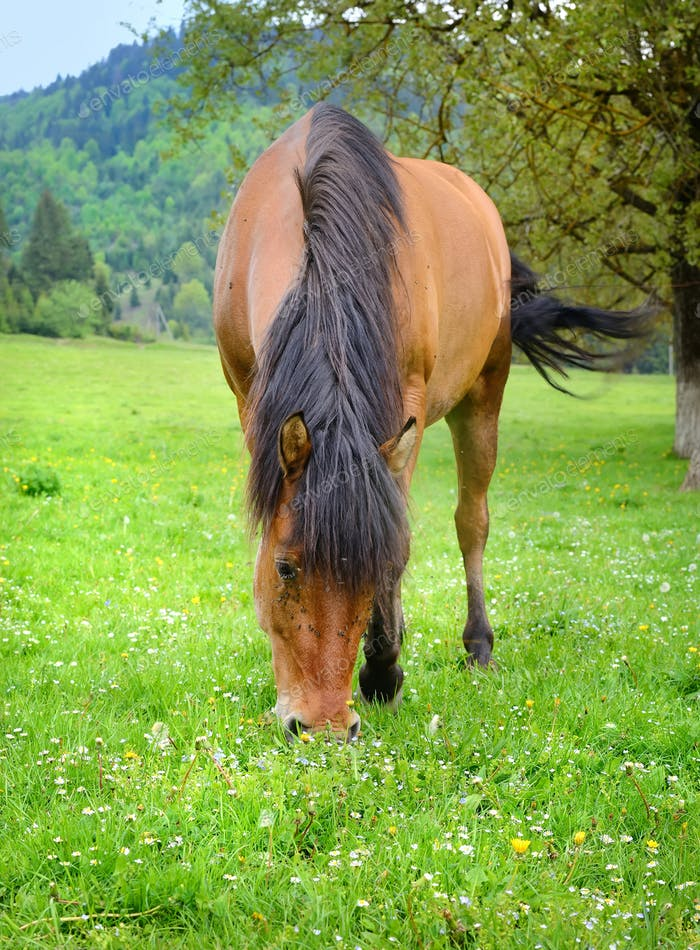 The horse is grazing on a summer green meadow
