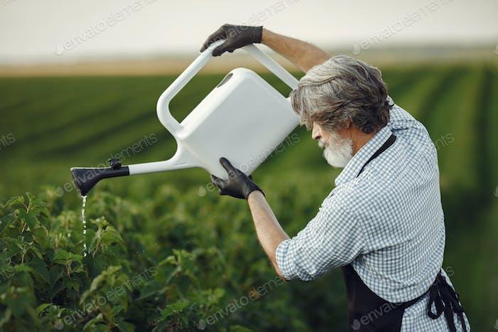 Senior man watering brush in the garden