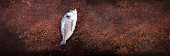 Uncooked fish on dark vintage background. Free space for your text. Banner