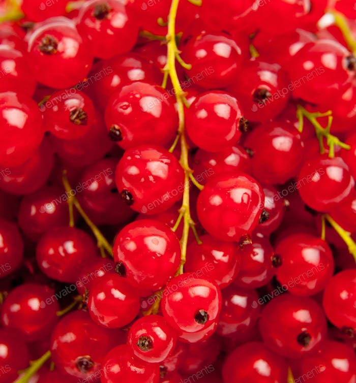berries of a red currant. Red currant berry close up colorful fruit background