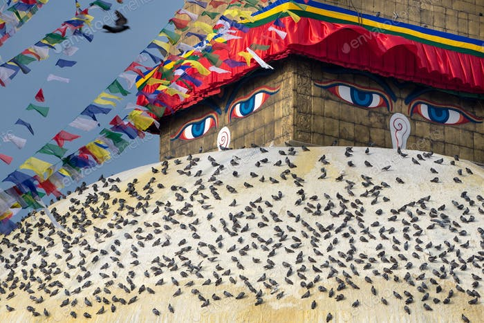 Pigeons and the Bodhnath stupa