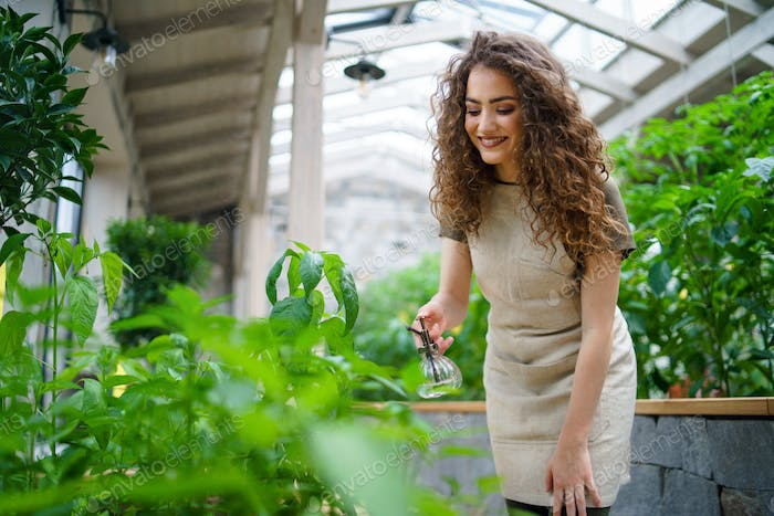 Woman gardener working in greenhouse, spraying plants with water