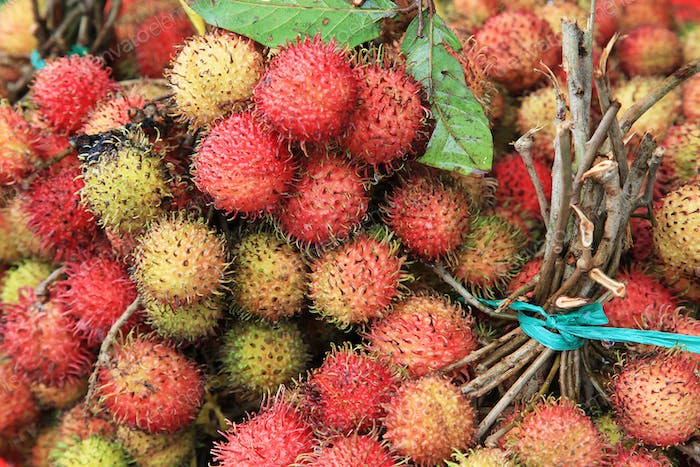 branches of the rambutan fruit