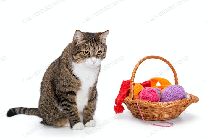 Big  gray cat and a basket of thread