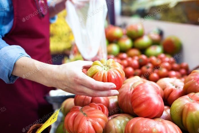 Saleswoman selecting fresh tomatoes and preparing for working da