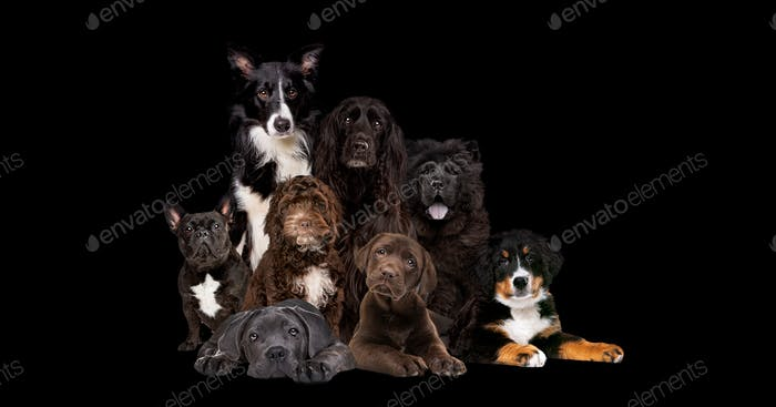 eight dogs on black background