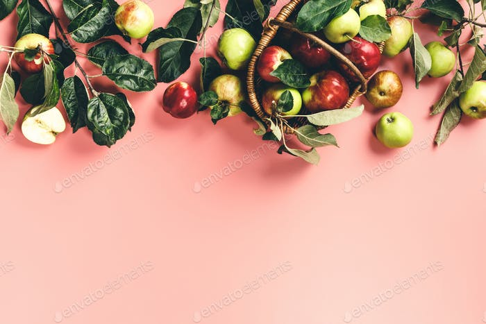 Flat-lay of fresh apples with leaves and branches on pink background
