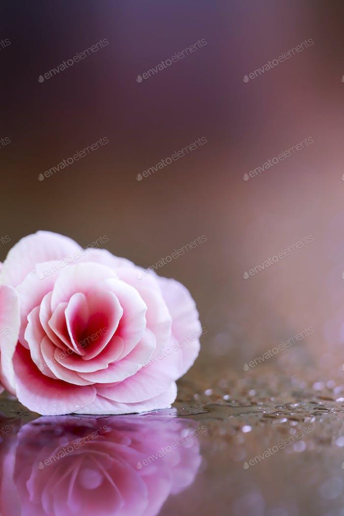 Pink Valentine's day vertical background