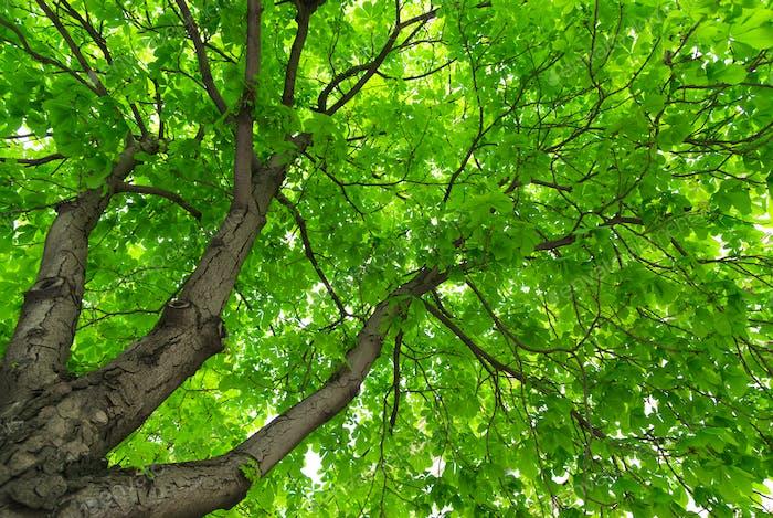 Under big tree.