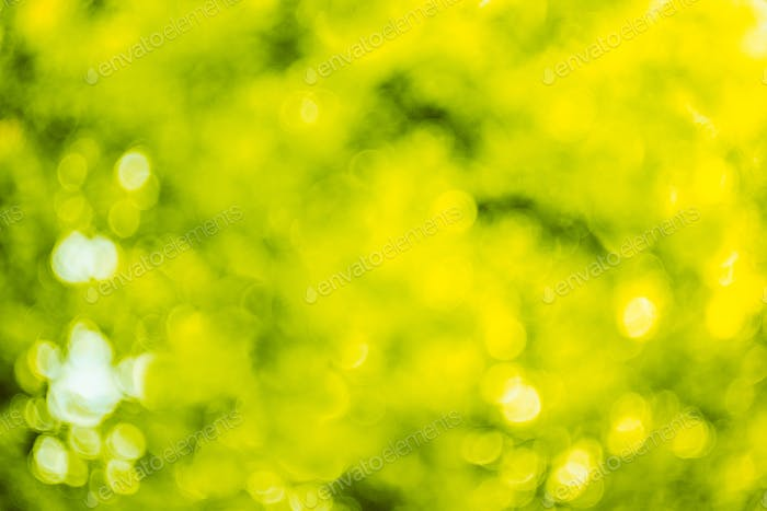 Blurred Abstract Bokeh Natural Green Background Of Summer Foliag