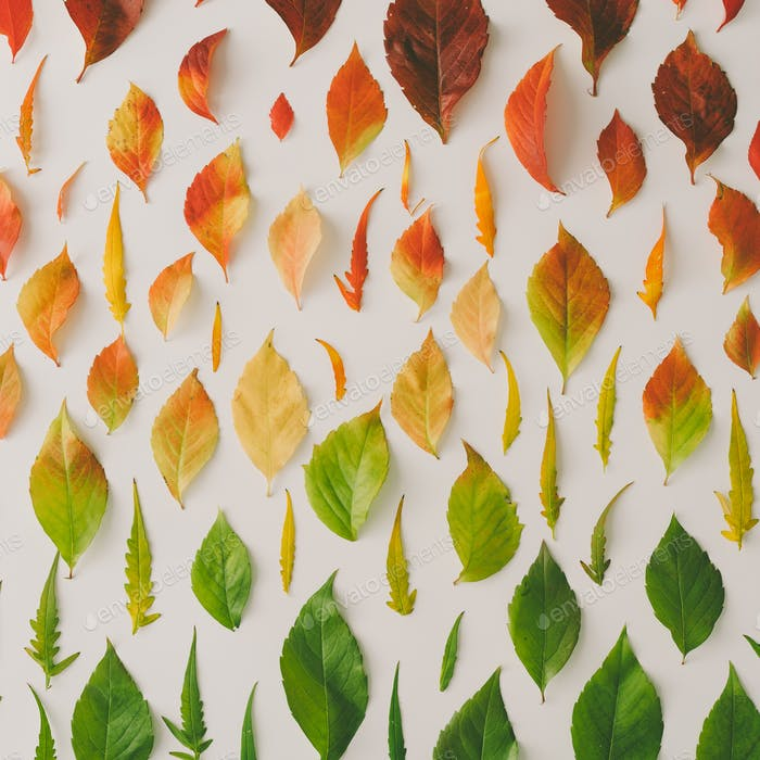 Creative pattern of colorful autumn or fall leaves. Flat lay, top view.