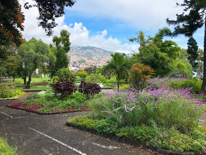 Beautiful garden of Madeira island, Portugal