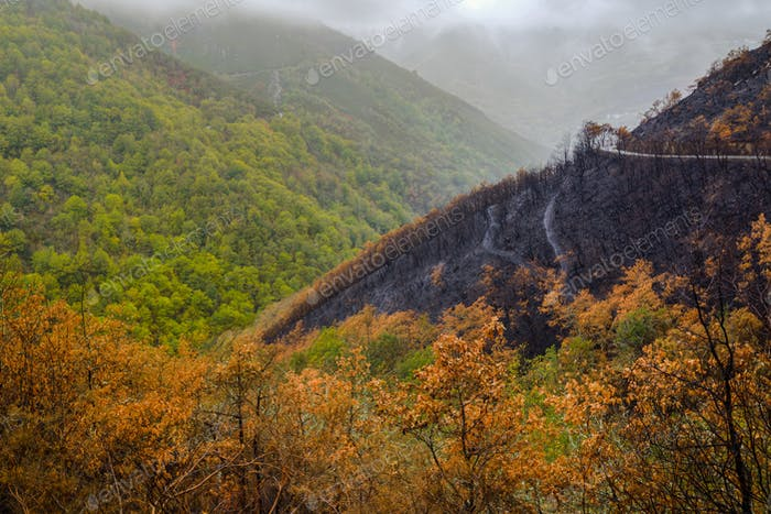Forests burned in forest fires